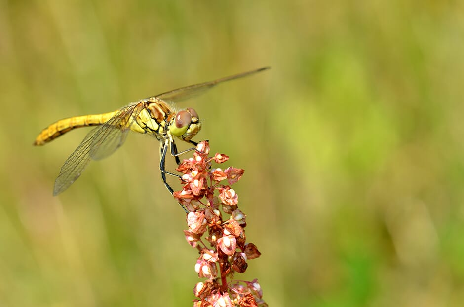 Dragonfly_9